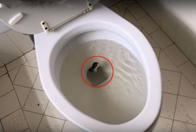 toilet_seat.jpg