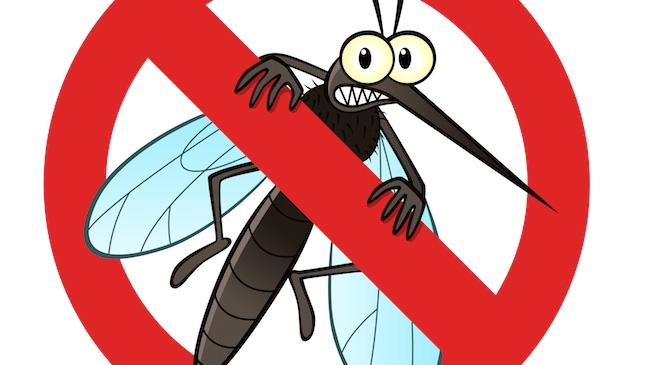 648_no_mosquito.jpeg