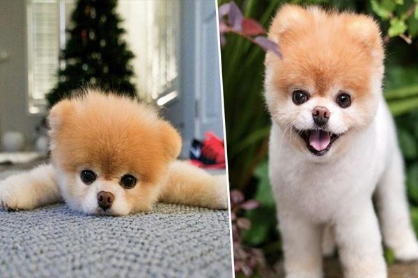 worlds_cutest_dog.jpg
