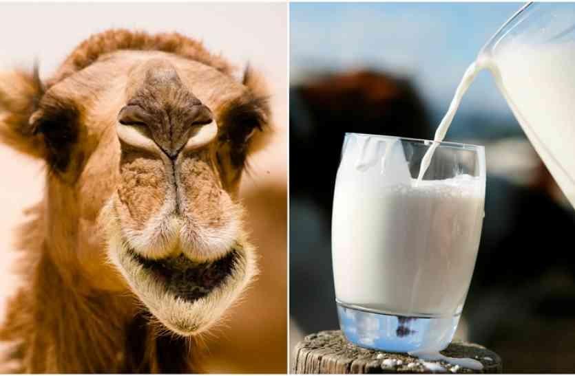 camel_milk2.jpg