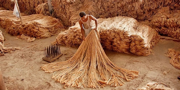 jute_production.png