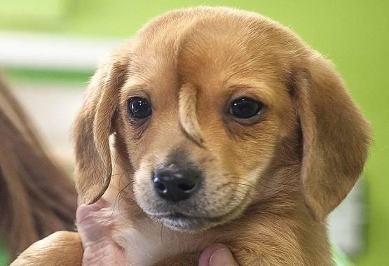 puppy_tail.jpg